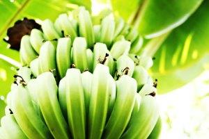 bananaverde